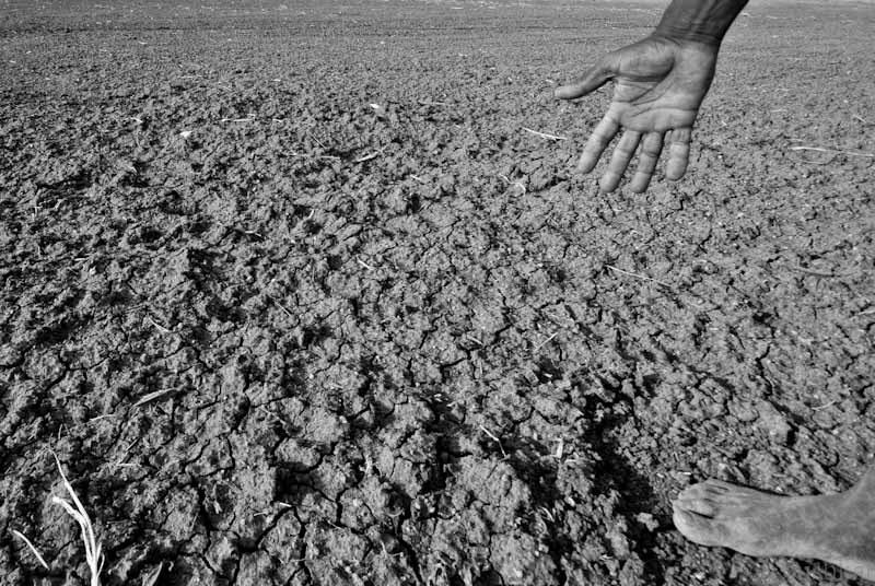 india farmers suicide