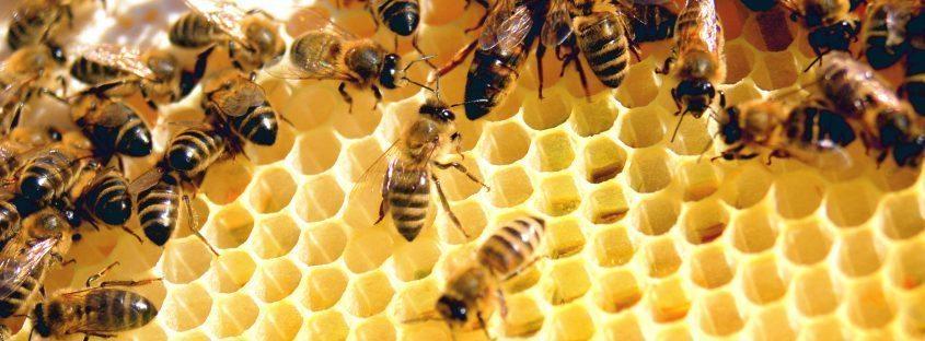 beekeeper in india