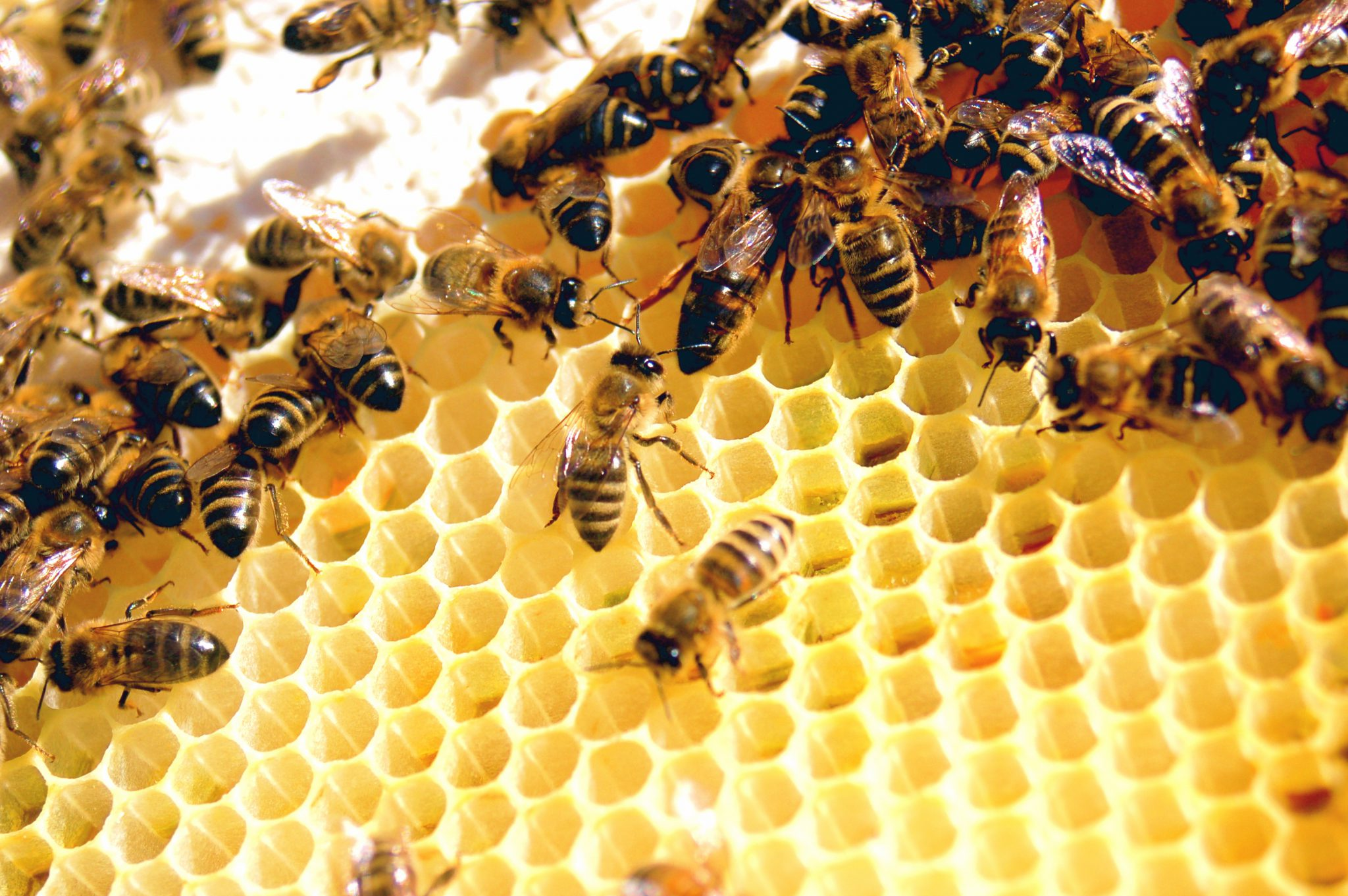 How to become a best beekeeper in India!