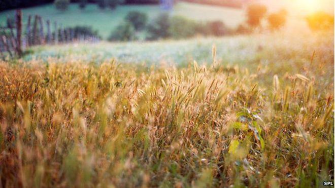 Organic farming associations