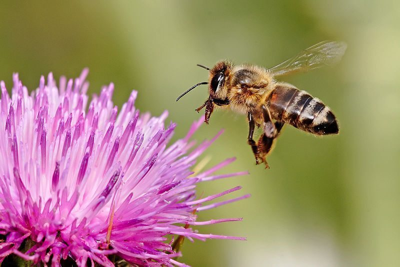 Sweet Deal of Honey Bee Farming-Tamil