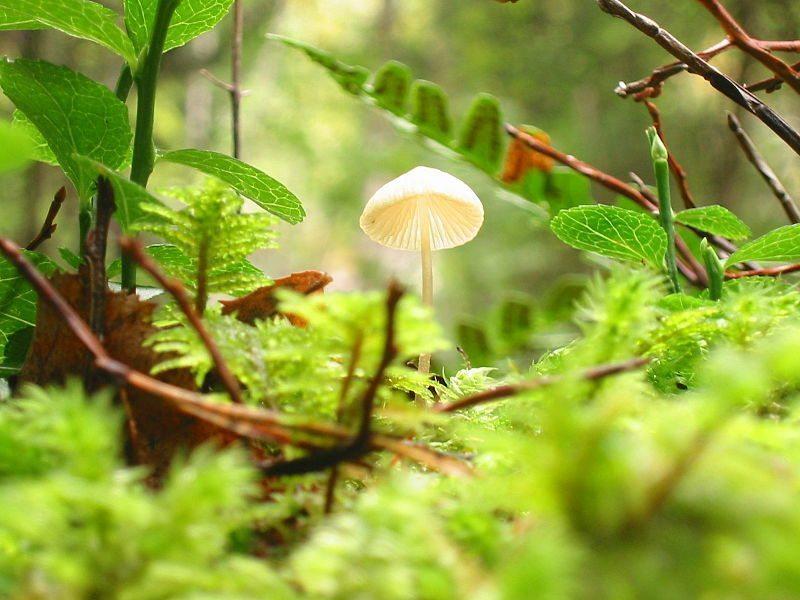 Money Making Mushroom cultivation-Tamil
