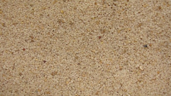 horse tail millet