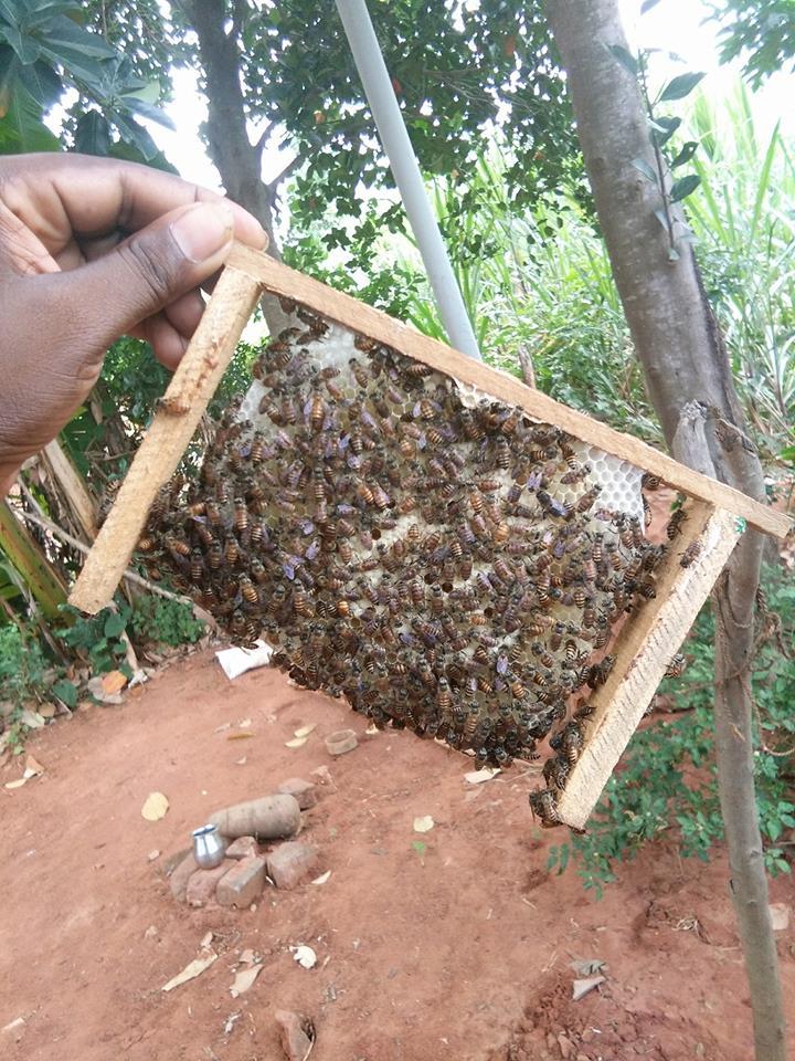 vp_honey_bee_tamilnadu_farmerjunction-5