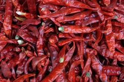 chilli_organic_farmer_junction