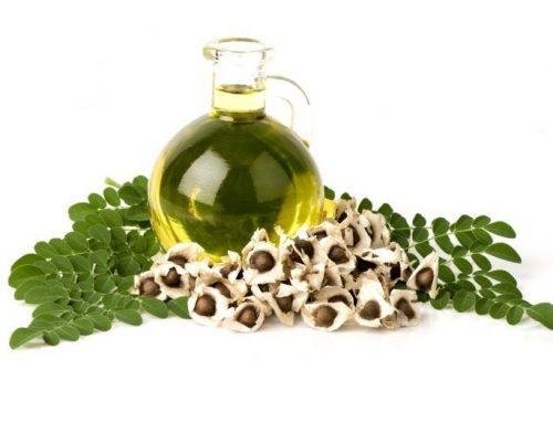 Moringa Cultivation Videos- Tamil, முருங்கை விவசாயம் செய்வது எப்படி